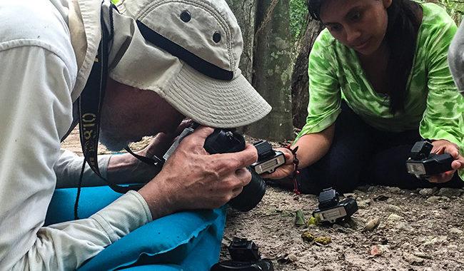 Guatemalan flora and fauna research