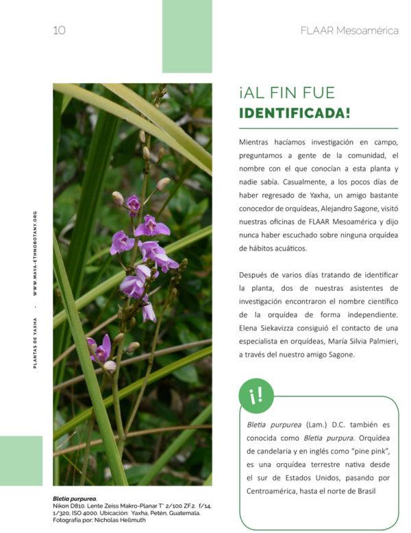 Bletia-vol1-Flora-Yaxha-FLAAR-Mesoamerica-Jan-2019