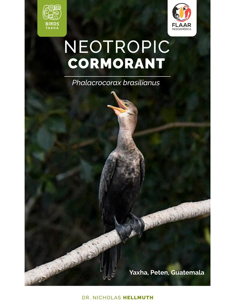 Cormoran Yaxha Birds FLAAR-Mesoamerica