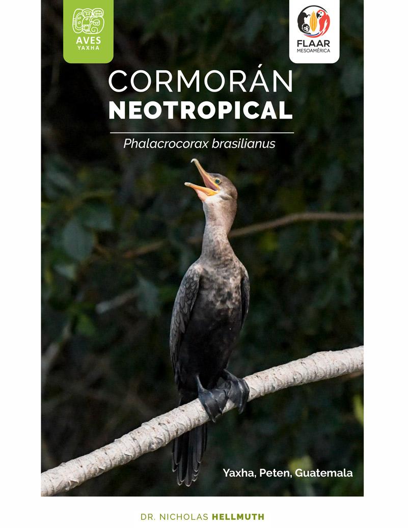 scientific-illustrations-of-birds-mammals-reptiles-yaxha