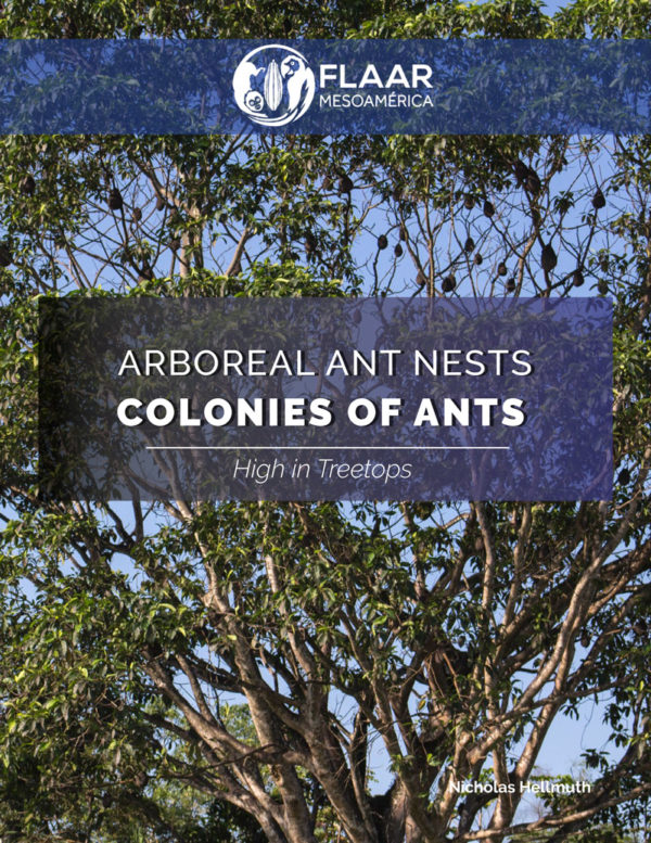 Arboreal ant nests at Rio Polochic Guatemala