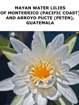 Waterlily-Nymphaea-ampla-Peten-Monterriro-Nicholas-Hellmuth_FLAAR_Reports-