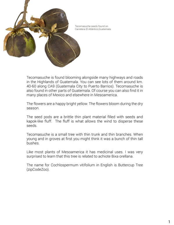 Seed-Dispersal-methods-Tecomasuche-Cochlospermum-vitifolium-FLAAR-Hellmuth-1
