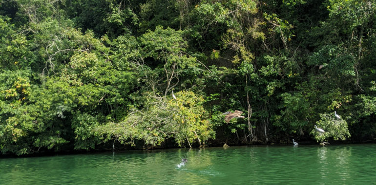 Tropical bird sanctuary in the Guatemalan caribbean