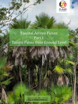 Tasistal-Arroyo-Faisan-Acoelorrhaphe-wrightii-Peten-Part-I-Hellmuth-FLAAR-Mesoamerica-2020-XA-cover-4