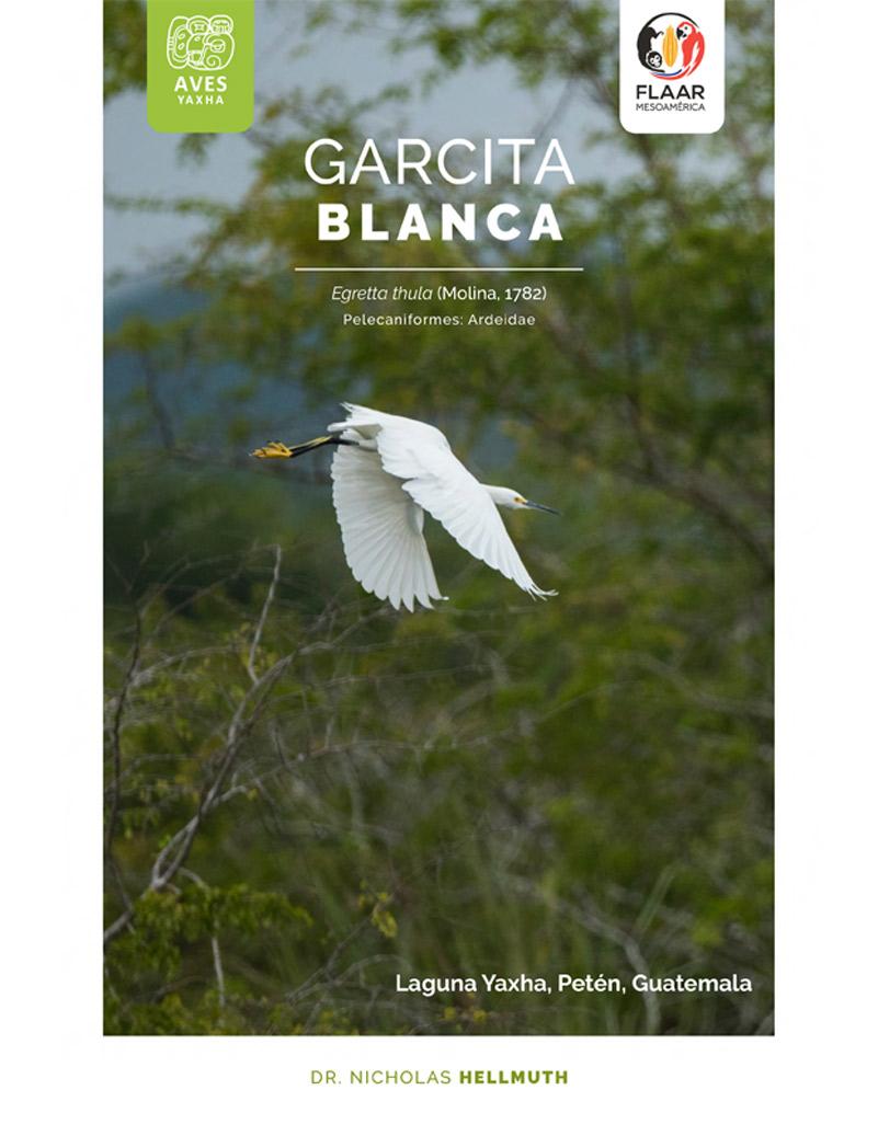 Egretta thula, Garcita Blanca. Yaxha Brids, FLAAR-Mesoamerica