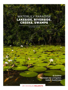 Livingston-report-Nymphaea-ampla-only-waterlily-Google-maps-English-JG