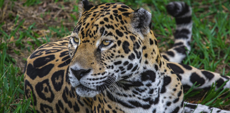 World Animal Day: Threatened Animals in Central America