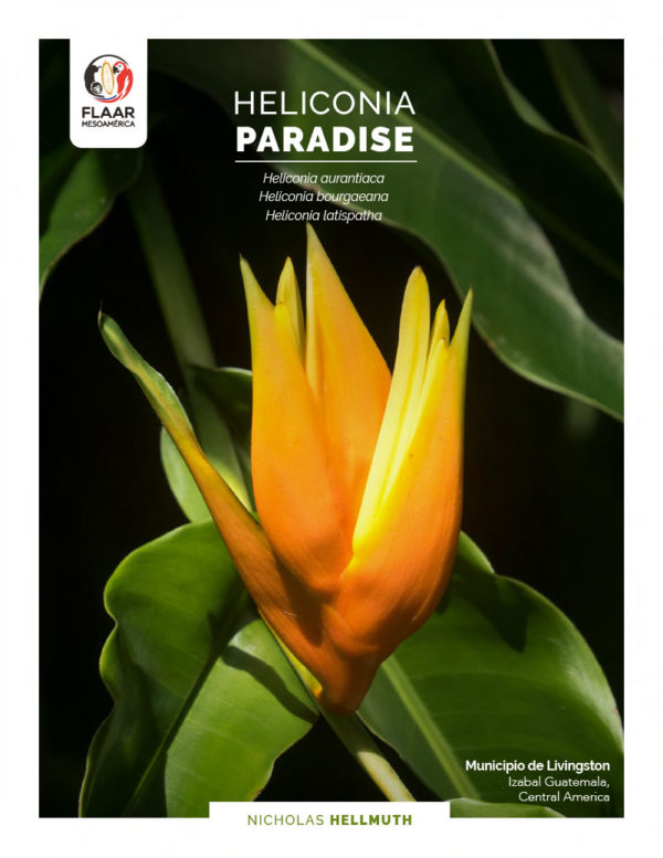 Heliconia-Paradise-three-species-road-to-Plan-Grande-Tatin-Plants-Livingston-FLAAR-Mesoamerica-Nov-2020-EN-cover