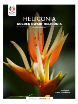 https://flaar-mesoamerica.org/wp-content/uploads/2021/02/Heliconia-aurantiaca-Municipio-de-Livingston-HG