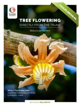 Cover Tree Flowering from the Trunk - Bellucia pentamera - jpg - english version - Apr - 2021 - CM-EPS