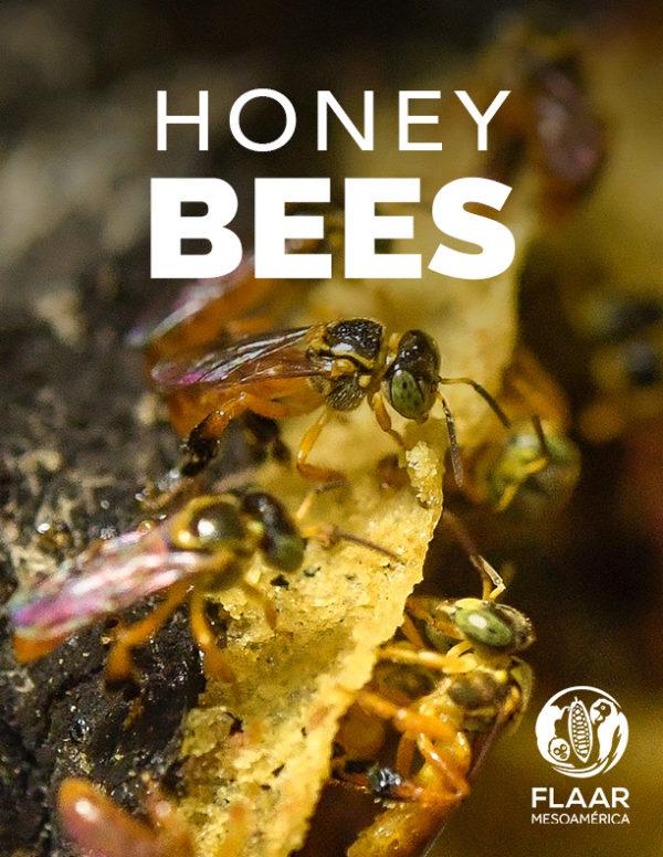 Yaxha-PNYNN-Don-Goyo-meliponia-honey-stingless-bee-Nicholas-style-PDF