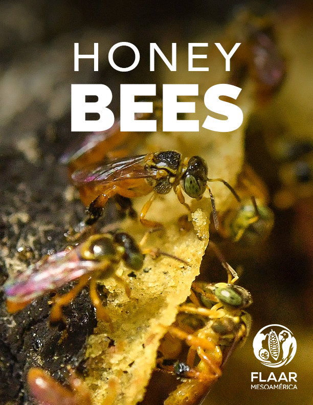 Yaxha-PNYNN-Don-Goyo-meliponia-honey-stingless-bee