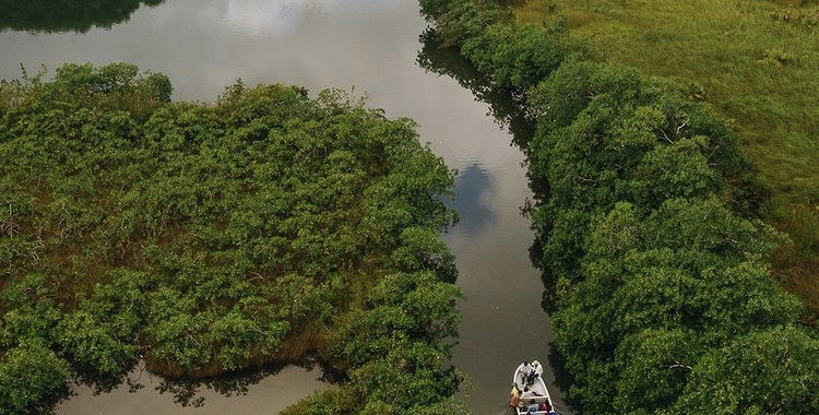 The Value of the Tropical Forests